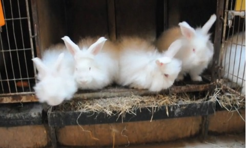 "Why did we call it ""Angora""?"
